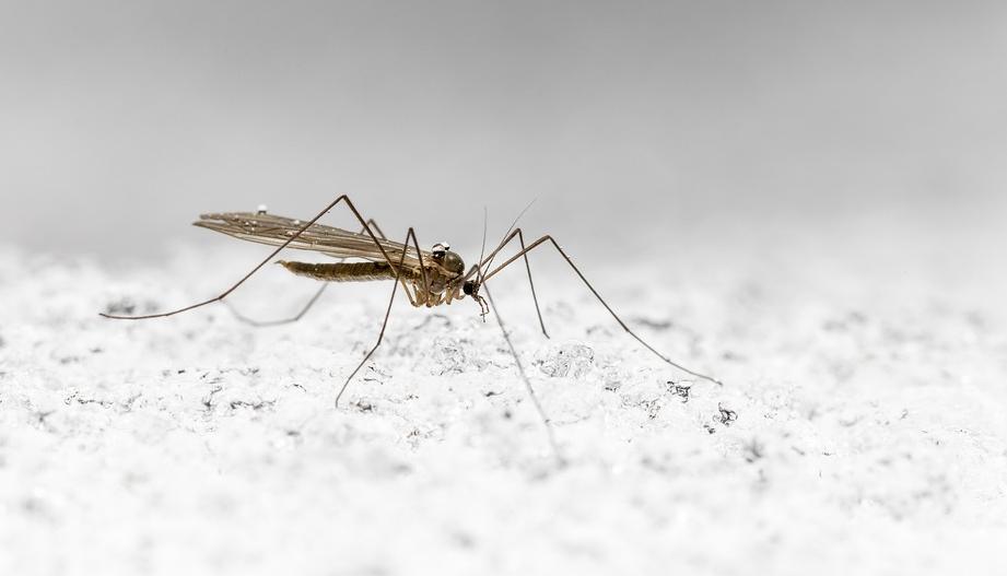 Mückenstecker