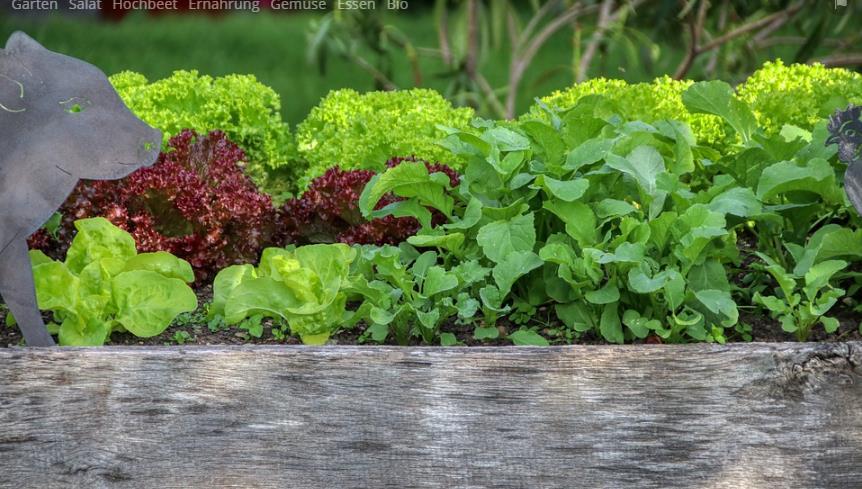 Gemüse im Beet