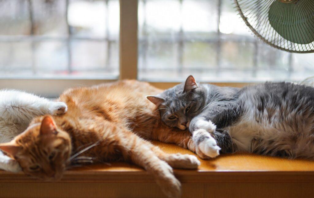 Zwei Katzen auf einer Fensterbank